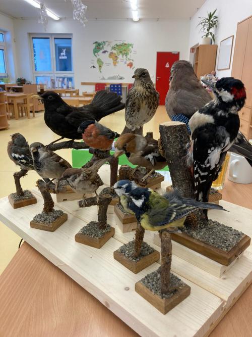 Výstava ptáčků, výroba krmítek